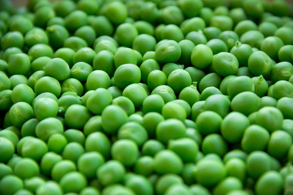 Pea Variety For Garden With Health Benefits