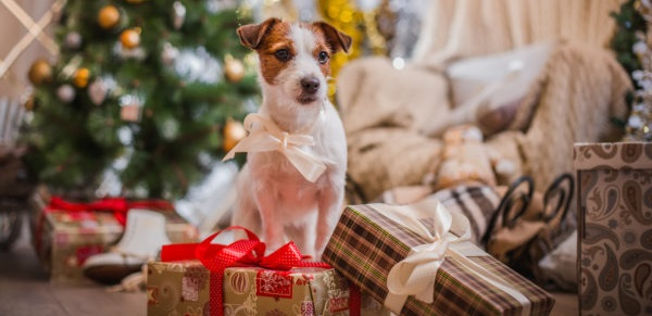 Christmas Tips For Keeping Pets Safe