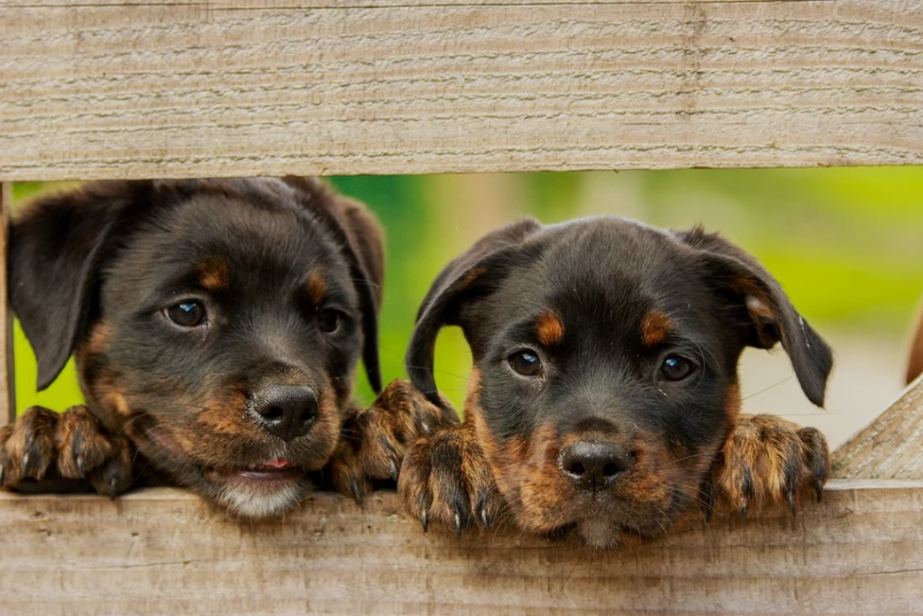 How to Pick The Best Puppy Breed For A Family With Young Children