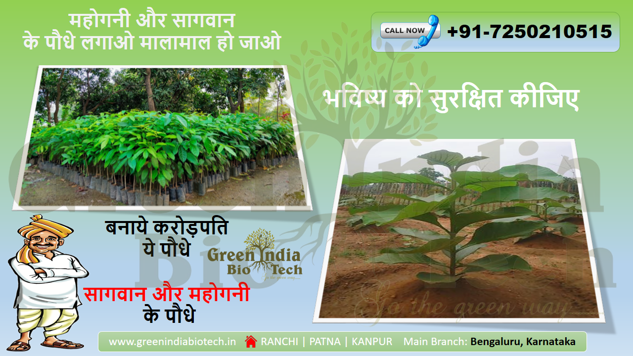 Defraying The Agricultural Damages — The Need Of Plantation Company In Patna, India